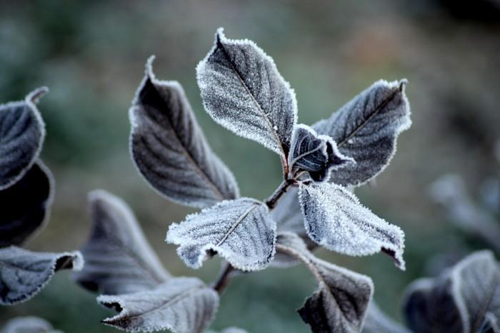 В Краснодарском крае внезапные заморозки могут стать причиной ЧС